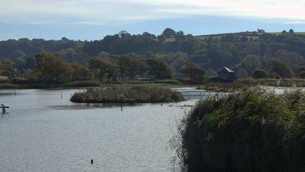Seaton-Wetlands-Section