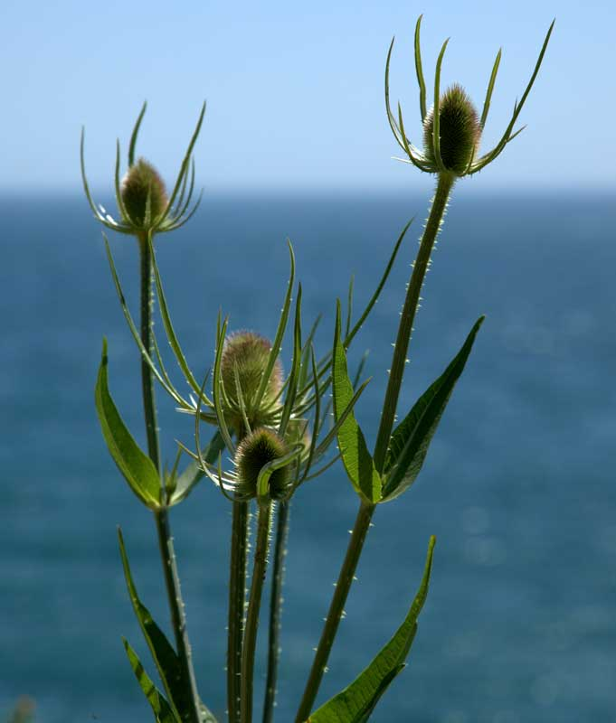 teazle-at-durlston-castleweb