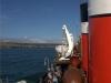 the-waverley-on-deck