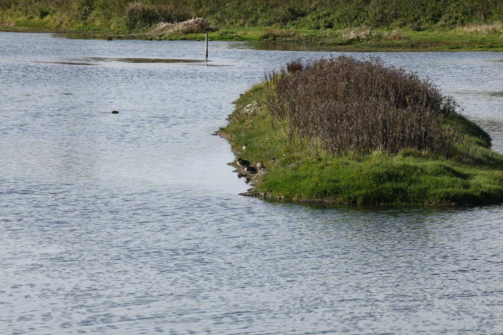 Axe-Estuary-Wetlands1