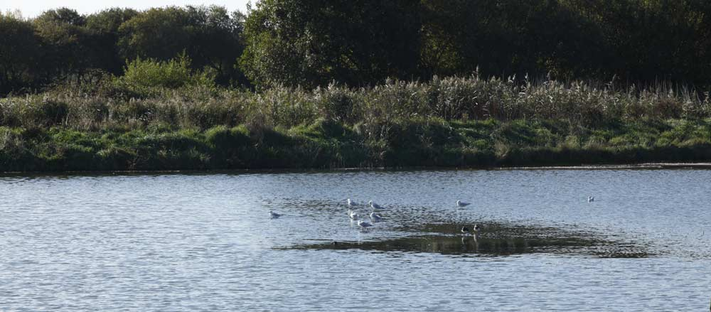 Seaton-Wetlands-Water