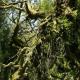 The Enchanting Wistman's Wood